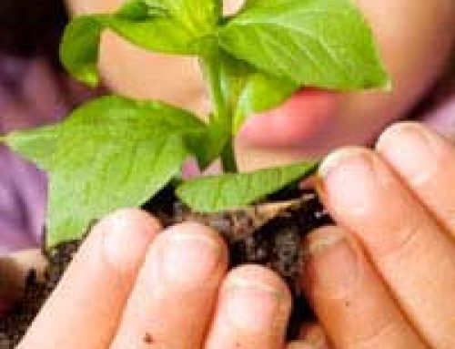 Eco-Schools and Green Schemes